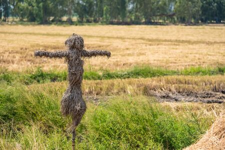 Scarecrow in rice field of thailand