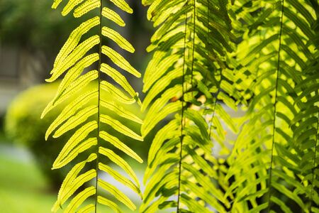 Green leaf in the tropical garden in Asia forest Stockfoto