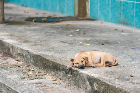 Homeless dog, Thai local dog.Puppy little street dog sleeping Stock Photo - 132213289