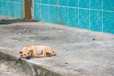 Homeless dog, Thai local dog.Puppy little street dog sleeping Stock Photo - 132213297
