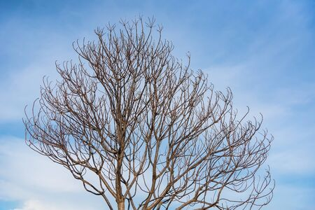tree branches background and clear blue sky