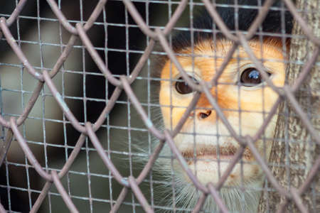 Bangkok, Thailand - September, 26, 2010 : Monkey in a cage at Dusit Zoo in Bangkok, Thailand