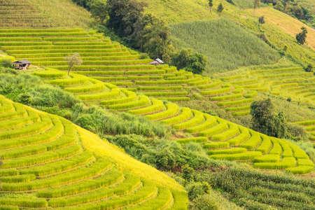 Panorama Aerial View of Pa Bong Piang terraced rice fields, Mae Chaem, Chiang Mai Thailand.