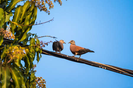 Bird perched on electric cable