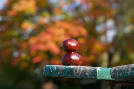 Conkers balancing on top of each other