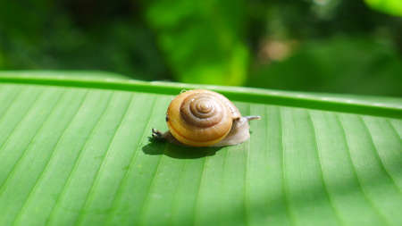 to find: a snail is walking to find food Stock Photo