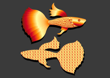 gold color Guppy fish vector. Isolated on gray background. Vector illustration or flat art Illustration