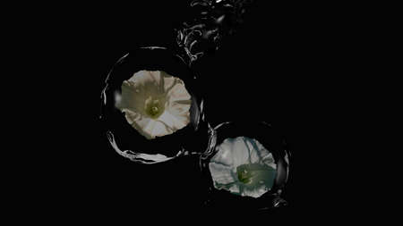 White wildflowers ( Calystegia sepium) wrapped in water balls. 3d illustration on black background Imagens