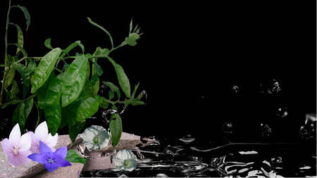 Feng shui picture with orange tree, flowers, stones and water. 3d illustration on black background Reklamní fotografie