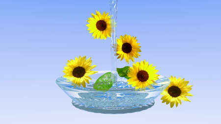 Sunflowers in a glass bowl with water with light blue gradient as a background Stok Fotoğraf