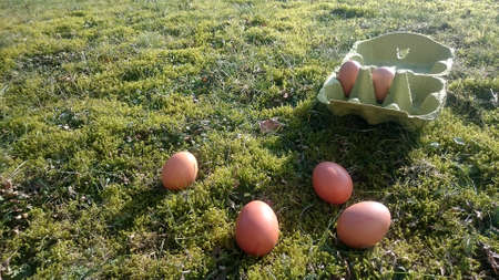 brown eggs on a meadow overgrown with moss with cardboard box with eggs