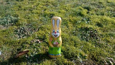 Chocolate hare on a meadow