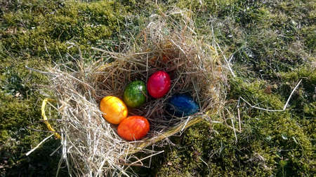 easter egg with colored eggs in a hay-filled basket on a meadow