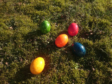 colorful eggs on a meadow overgrown with moss