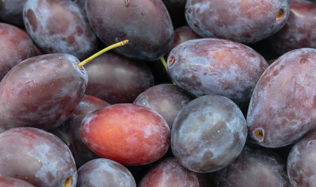 Background image of delicious plums in close-up.