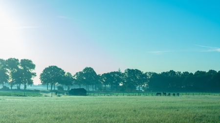 Fields with horses in the early morning light. Location: Germany, North Rhine - Westphalia, Borken - Marbeck Standard-Bild - 109581709