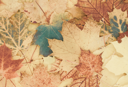 beautiful autumnal background from leaves Standard-Bild - 110119678