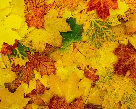 beautiful autumnal background of leaves in bright colors Standard-Bild - 110119682