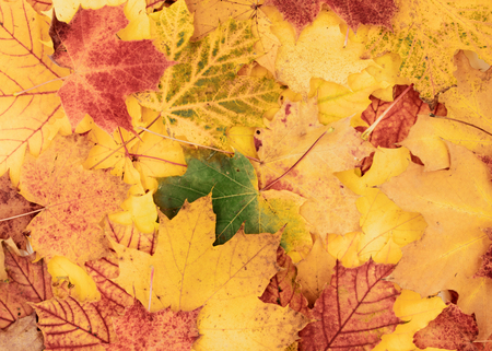 beautiful colorful, autumnal background of leaves Standard-Bild - 110119688