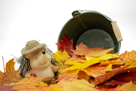 Cute hedgehog with straw hat stands in a pile of leaves Standard-Bild - 110119692
