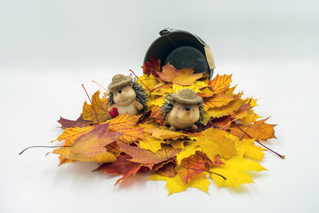 Maple leaves in front of a small metal bucket. In the pile of leaves sits a hedgehog couple with straw bags. Standard-Bild - 110119694