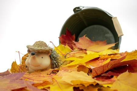 Cute hedgehog sitting in a pile of leaves Standard-Bild - 110119695