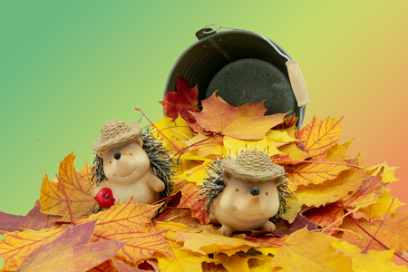 cute hedgehog couple in a pile of leaves with colored background Standard-Bild - 110119696