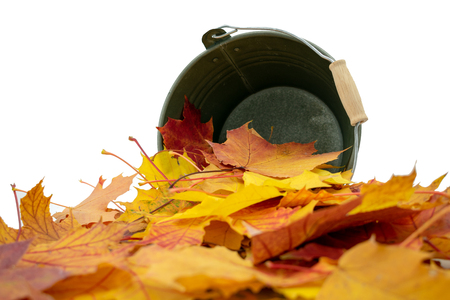 lying metal bucket from which fall maple leaves in autumn colors Standard-Bild - 110119699