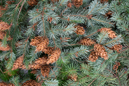 Christmas background of fir branches and pine cones Standard-Bild - 110119702