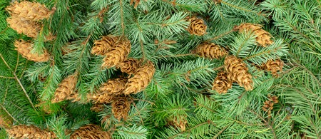 Christmas banner background made of fir branches and pine cones Standard-Bild - 110119703