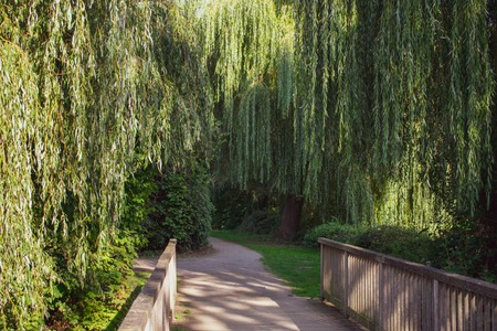 enchanted wooden bridge with weeping willows. Location: Germany, North Rhine-Westphalia, Hoxfeld Standard-Bild - 110710106