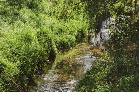 beautiful brook in the sunlight. Location: Germany, North Rhine-Westphalia, Marbeck Standard-Bild - 110710113