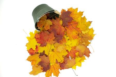 Bucket of autumn maple leaves.Isolated on white Standard-Bild - 110710132