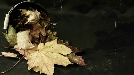 beautiful, abstract background image with maple leaves in a bucket, water and dark leaves