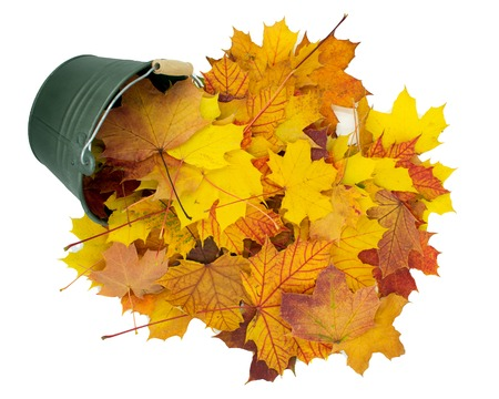 small bucket falling from the colorful, autumnal leaves.