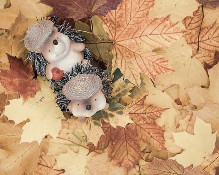 cute hedgehog couple in maple leaves.cute animal figures of hedgehogs sits in a pile of leaves. Studio Shot Standard-Bild - 110710163