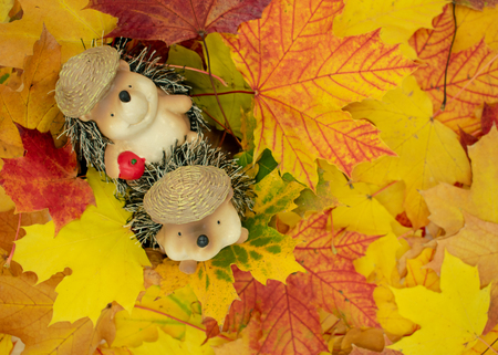 cute hedgehog couple sitting in a pile of leavescute animal figures of hedgehogs sits in a heap of maple leaves. Studio Shot Standard-Bild - 110710165