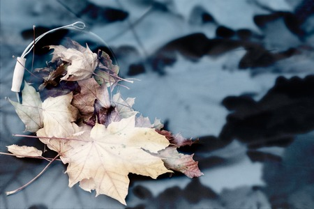 beautiful abstract background from maple leaves Standard-Bild - 110710575