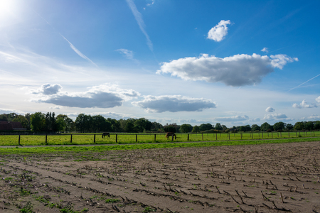 beautiful blue cloud sky over fields and meadows with horses. Location: Germany, North Rhine - Westphalia, Borken Standard-Bild - 110710646