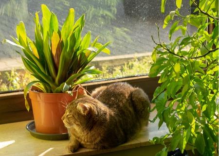 tabby chills in the sun on the windowsillIndoors Standard-Bild - 117803975