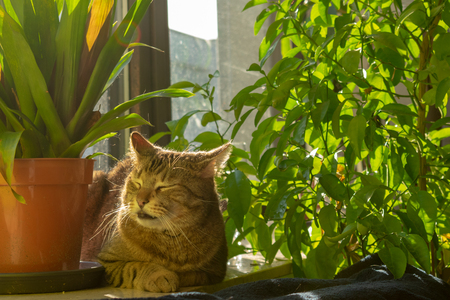 pretty tabby domestic cat lounging in the sun on the windowsill