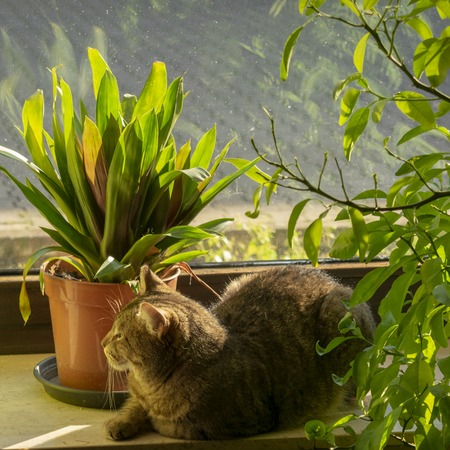 pretty tabby domestic cat chills in the sun on the windowsill Indoors