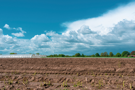 Landscape with asparagus field in the foreground at blue cloud sky. Location: Germany, North Rhine-Westphalia, Heiden Stok Fotoğraf