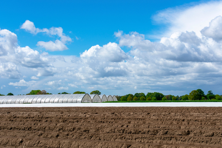 Landscape with asparagus field and greenhouse at blue cloud sky. Location: Germany, North Rhine-Westphalia, Heiden