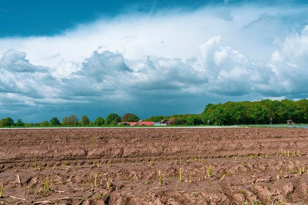 Beautiful landscape picture with asparagus field in the foreground. Location: Germany, North Rhine-Westphalia, Heiden Standard-Bild - 127296285