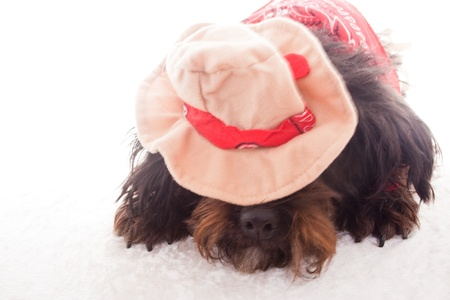 liying: dog liying down with cowboy hat Stock Photo