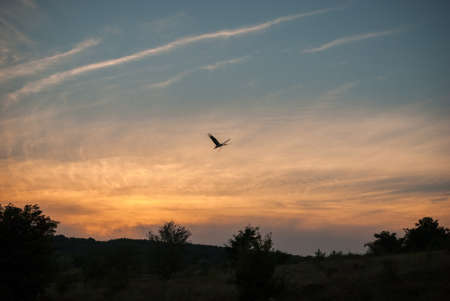 Sunset nature and flying stork. Sunset colors nature background
