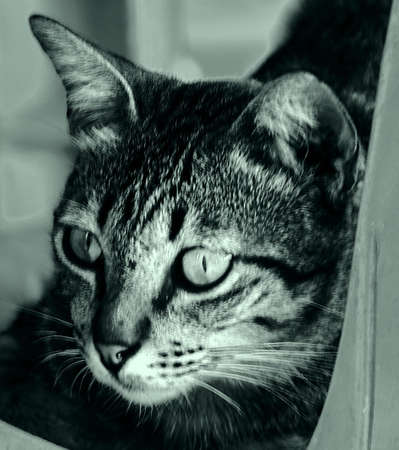 whisker: A Cats Whisker Stock Photo