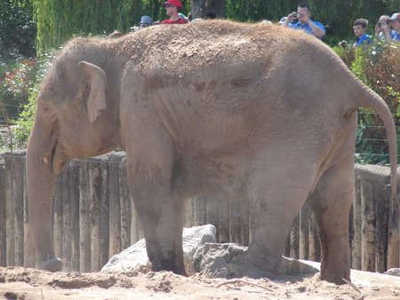 photo of Elephant in Chester ZOO
