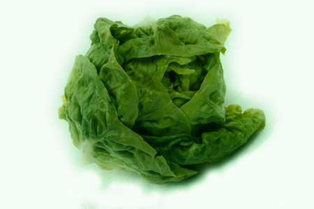 photo of fresh lettuce on a white background